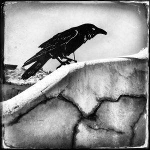 crow statue