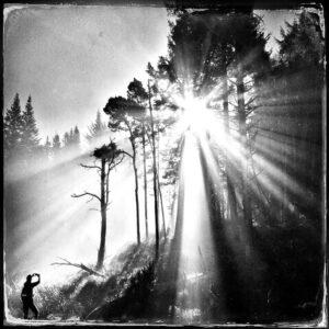 Trees, woman, sunburst
