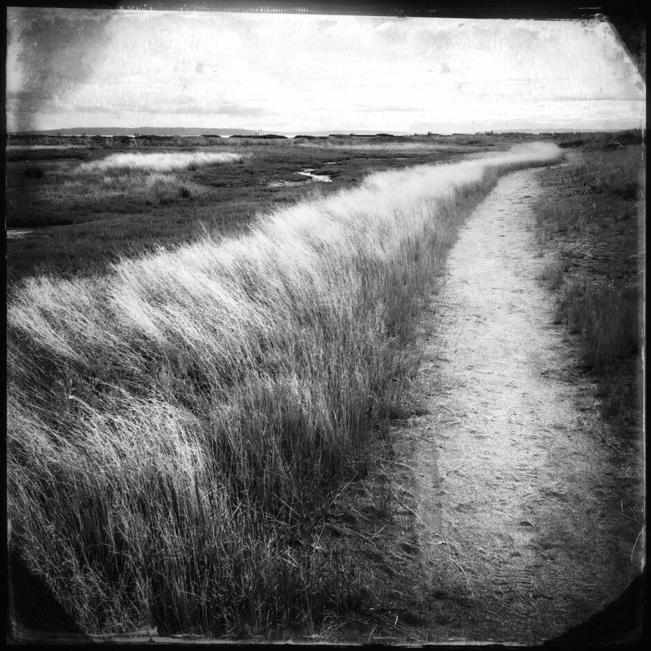 pathway, beach