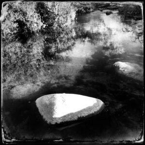 rock, water, bush