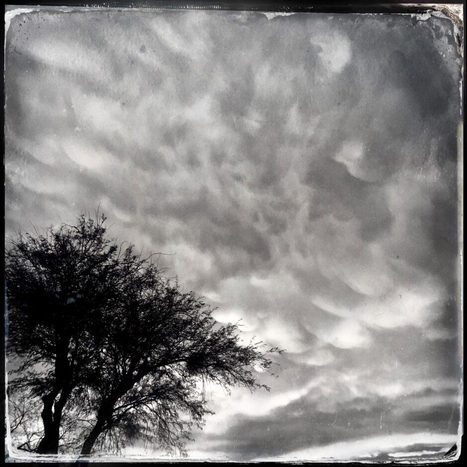 tree, sky, clouds