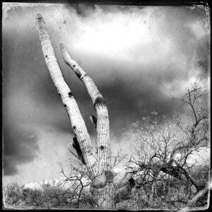 cactus, sky, clouds