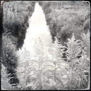 water, field