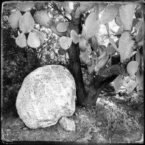 rock, cactus