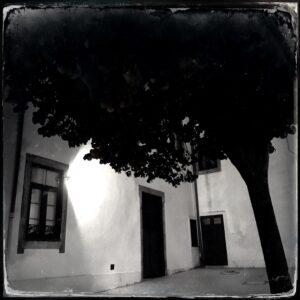 tree, building